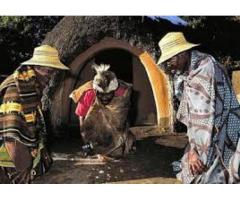 Powerful Traditional Healer Call +27717955374 No Problem Without A Solution to Me