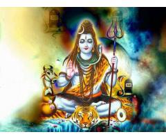 Best astrologer Parkash acharya shastri ji