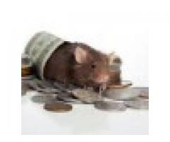 Spiritual rats and Amayezo spirits that bring money+27734009912